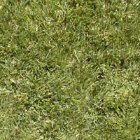 Collection\Adbe: Grass