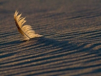 Collection\Beautiful Nature: Feather-in-sand-66