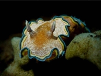 Collection\Beautiful Nature: Marine-Life-18