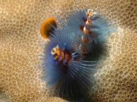 Collection\Beautiful Nature: Marine-Life-34
