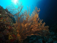 Collection\Beautiful Nature: Sea-Fan