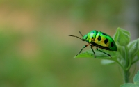 Collection\Msft\Insects: Green-Beetle