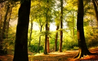 Collection\Msft\Landscapes: Beech-Tree-Forest-Wuppertal-Germany