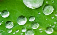 Collection\Msft\Plants: Waterdrops-on-leaf