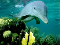 Collection\Nature Portraits: Dolphin-smiling-over-green-coral
