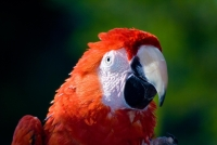 Collection\Nature Portraits: Parrot