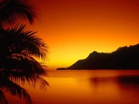Collection\Nature Portraits: Sunset-orange-over-sea-shore-and-palm-tree