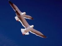 Collection\Nature Portraits: Two-gulls
