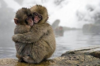 Mammal: Two-monkeys-warm-themselves-together