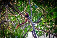 Rainforest: Unexplored-earth-amazon---rainforest-monkey