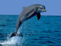 SeaLife: Dolphin-jumps-out-water